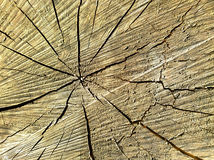 Ο πυρήνας ενός δέντρου περικοπών με τις ρωγμές Στοκ εικόνα με δικαίωμα ελεύθερης χρήσης