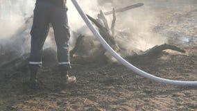 Ο πυροσβέστης εξαφανίζει μια πυρκαγιά από μια μάνικα πυρκαγιάς Μμένος στους άνθρακες, μαύρος καπνός δέντρων στα πλαίσια των ποδιώ απόθεμα βίντεο