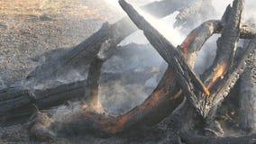 Ο πυροσβέστης εξαφανίζει μια πυρκαγιά από μια μάνικα πυρκαγιάς Μμένος στους άνθρακες, μαύρος καπνός δέντρων στα πλαίσια των ποδιώ φιλμ μικρού μήκους