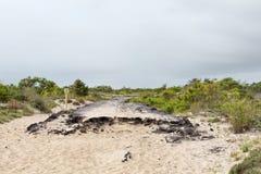 Ο δρόμος ασφάλτου παραμένει στο νησί Assateague, Μέρυλαντ Στοκ Εικόνες
