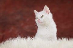 ο δρόμος γατακιών τρέχει το λευκό Στοκ φωτογραφία με δικαίωμα ελεύθερης χρήσης