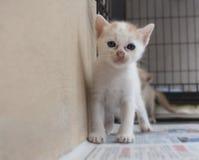 ο δρόμος γατακιών τρέχει το λευκό Στοκ εικόνες με δικαίωμα ελεύθερης χρήσης