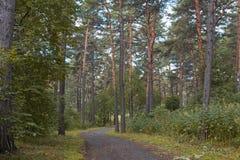 Ο δρόμος είναι σε ένα δάσος πεύκων Στοκ φωτογραφία με δικαίωμα ελεύθερης χρήσης