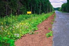 Ο δρόμος μέσω του δάσους Στοκ εικόνα με δικαίωμα ελεύθερης χρήσης