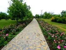 Ο δρόμος μέσω του άλσους Τα λουλούδια και τα δέντρα Στοκ φωτογραφία με δικαίωμα ελεύθερης χρήσης