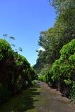 Ο δρόμος μεταξύ των δέντρων Στοκ Εικόνα