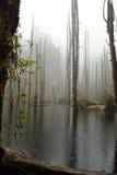 Ο δρόμος περιζώνει το δάσος Στοκ εικόνα με δικαίωμα ελεύθερης χρήσης