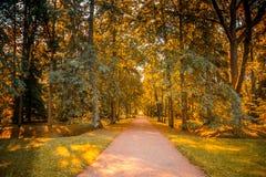 Ο δρόμος στα ξύλα στοκ φωτογραφία με δικαίωμα ελεύθερης χρήσης