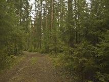 Ο δρόμος στο δάσος μεταξύ των δέντρων Στοκ Εικόνες