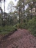 Ο δρόμος στο δάσος, σύνολο τρόπων βγάζει φύλλα Στοκ Εικόνες