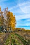 Ο δρόμος στο δάσος φθινοπώρου στοκ εικόνες με δικαίωμα ελεύθερης χρήσης