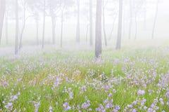 Ο ρόδινος τομέας λουλουδιών στο δάσος πεύκων Στοκ εικόνες με δικαίωμα ελεύθερης χρήσης