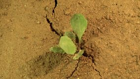 Ο σεισμός σχίζει το έδαφος χώρια, που τινάζει τη γη με τη ρωγμή στο έδαφος με την ανάπτυξη των εγκαταστάσεων, έννοια καταστροφής φιλμ μικρού μήκους