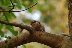 Ο σκίουρος στην ταπετσαρία δέντρων στοκ φωτογραφία με δικαίωμα ελεύθερης χρήσης