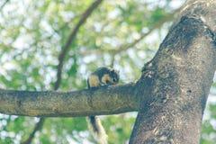 Ο σκίουρος στο δέντρο είναι μικρό θηλαστικό στοκ φωτογραφίες με δικαίωμα ελεύθερης χρήσης