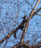 Ο σκίουρος Στοκ φωτογραφία με δικαίωμα ελεύθερης χρήσης