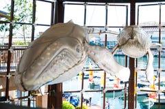 Ο σκελετός φαλαινών στην άσπρη πλαστική κάλυψη κρεμά ως διακόσμηση στο λιμάνι αγαπών, Σίδνεϊ, Αυστραλία στοκ φωτογραφίες