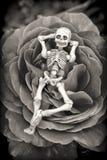 Ο σκελετός αυξήθηκε Στοκ Εικόνες