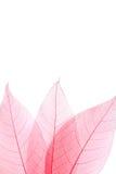 Ο σκελετός βγάζει φύλλα Στοκ Εικόνα