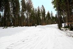 Ο σκιέρ κάνει σκι κάτω από την κλίση στα ξύλα Στοκ Εικόνες
