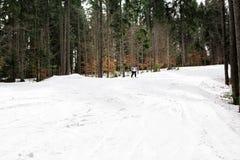 Ο σκιέρ κάνει σκι κάτω από την κλίση στα ξύλα Στοκ εικόνα με δικαίωμα ελεύθερης χρήσης