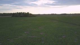 Ο σκοτεινός νεφελώδης ουρανός βραδιού επάνω από πράσινο ο τομέας φιλμ μικρού μήκους