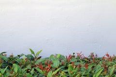 Ο συμπαγής τοίχος με τους τοίχους δέντρων διακοσμεί το μακροχρόνιο κατώτατο σημείο της εικόνας στοκ φωτογραφίες
