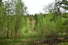 Ο συνδυασμός κωνοφόρων και αποβαλλόμενων δασών εντυπωσιάζει με την ομορφιά και το μεγαλείο στοκ εικόνες