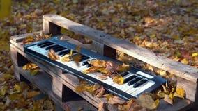 Ο συνθέτης βρίσκεται στο δάσος στα κίτρινα φύλλα Κίτρινη πτώση φύλλων στο συνθέτη autumnal forest απόθεμα βίντεο