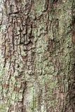 Ο σχισμένος φλοιός ενός δέντρου Στοκ φωτογραφία με δικαίωμα ελεύθερης χρήσης