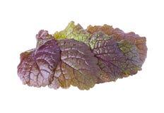 Ο σωρός με τα πολύβλαστα φύλλα μουστάρδας Στοκ εικόνες με δικαίωμα ελεύθερης χρήσης