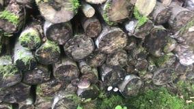 Ο σωρός συνδέεται το δάσος φιλμ μικρού μήκους