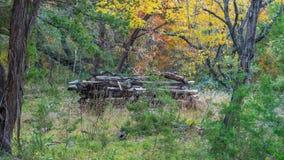 Ο σωρός συσσωρευμένος επάνω συνδέεται ένα δάσος στοκ εικόνα