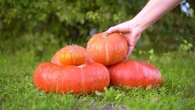 Ο σωρός των διαφορετικών μεγέθους πορτοκαλιών κολοκυθών στην αγορά βρίσκεται στην πράσινη χλόη σε ένα υπόβαθρο των δέντρων Το κορ απόθεμα βίντεο