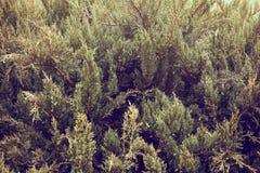 Ο σωρός των κιβωτίων δώρων που διακοσμήθηκαν στο χριστουγεννιάτικο δέντρο με το φωτισμό διακόσμησε το χριστουγεννιάτικο δέντρο στ Στοκ Φωτογραφίες