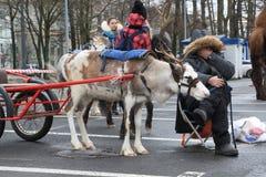 Ο τάρανδος, που χρησιμοποιούνται σε ένα κάρρο περπατήματος, και ο κύριός του Στοκ εικόνες με δικαίωμα ελεύθερης χρήσης