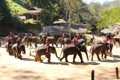 Ο ταϊλανδικός ελέφαντας εμφανίζει Στοκ φωτογραφίες με δικαίωμα ελεύθερης χρήσης