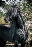 Ο τεράστιος μαύρος επιβήτορας αναπαραγωγής θέτει υπέροχα στοκ φωτογραφία με δικαίωμα ελεύθερης χρήσης