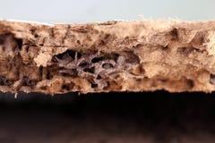 Ο τερμίτης φωλιών, υπόβαθρο του τερμίτη φωλιών, έβλαψε ξύλινο πουφαγώθηκε από τον τερμίτη ή το άσπρο μυρμήγκι στοκ φωτογραφία με δικαίωμα ελεύθερης χρήσης