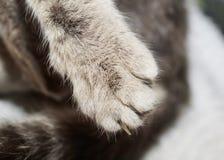 Ο τιγρέ ύπνος γατών τέντωσε έξω ένα πόδι με τα νύχια Στοκ Φωτογραφία