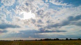 Ο τομέας καλαμποκιού επηρεάζεται από την ξηρασία στοκ φωτογραφίες με δικαίωμα ελεύθερης χρήσης