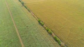Ο τομέας καλαμποκιού επηρεάζεται από την ξηρασία στοκ φωτογραφίες