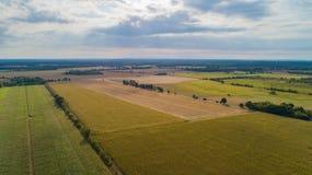 Ο τομέας καλαμποκιού επηρεάζεται από την ξηρασία στοκ εικόνες