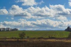 Ο τομέας των πράσινων βλαστών των χειμερινών συγκομιδών μπλε σύννεφων πλήρες πράσινο τοπίο εστίασης πεδίων ημέρας οφειλόμενο λίγη Στοκ Φωτογραφίες