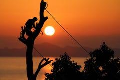 Ο τοπικός ορειβάτης δέντρων κόβει έναν κλάδο με το χέρι το πριόνι, κόκκινοι ήλιοι ουρανού Στοκ Φωτογραφία