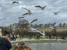 Ο τουρίστας παίρνει τη φωτογραφία των γλάρων που κυματίζουν πέρα από μια λίμνη στον κήπο Tuileries, Παρίσι, Γαλλία στοκ εικόνα