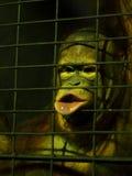 Ο τριχωτός πίθηκος στο ζωολογικό κήπο χαμηλού φωτός μέσα σε ένα κλουβί μετάλλων προσπαθεί να εκφράσει και να επικοινωνήσει Στοκ φωτογραφία με δικαίωμα ελεύθερης χρήσης
