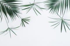 Ο τροπικός εξωτικός πράσινος φοίνικας διακλαδίζεται φύλλα σε ένα άσπρο υπόβαθρο στοκ εικόνες