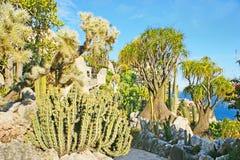 Ο τροπικός κήπος στο Μονακό στοκ φωτογραφίες