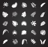 Ο τροπικός κύκλος βγάζει φύλλα τα εικονίδια που τίθενται στο μαύρο υπόβαθρο για το γραφικό και σχέδιο Ιστού, σύγχρονο απλό διανυσ διανυσματική απεικόνιση